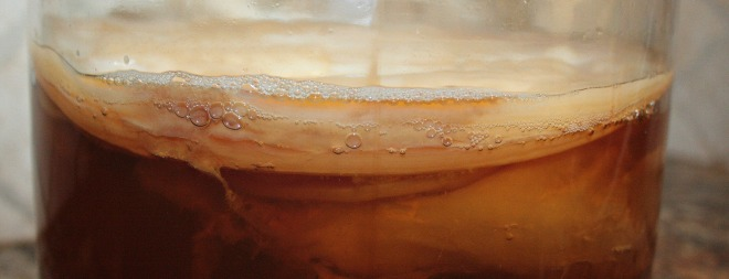 It's alive!!! Healthy bacteria and yeast work together to form a SCOBY on the surface of the brewing kombucha.